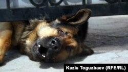 Обычно, как рассказывает Олег Теремков, домашние животные заражаются от диких
