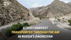 Flying Fruit: Homemade Cable Cars Help Bring In Harvest In Daghestan