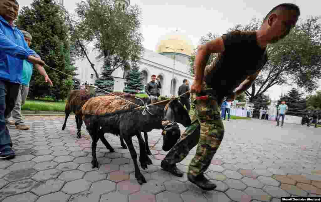 В этот праздник мусульмане приносят в жертву овцу или другое животное.