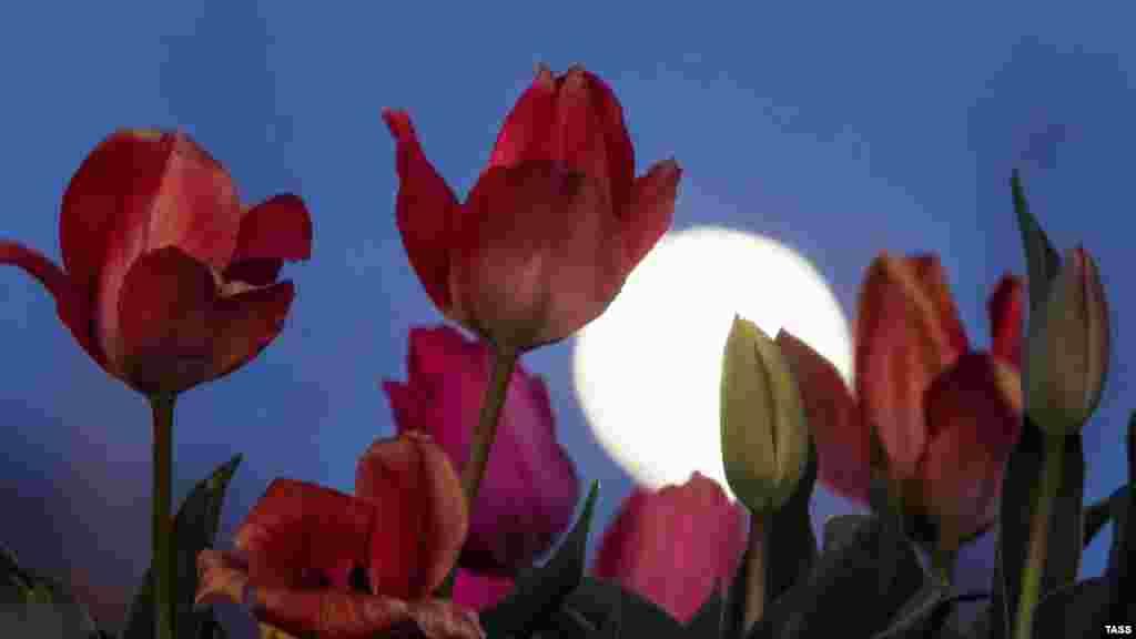 Вид на «розовую Луну» в селе Клиновка под Симферополем. Крымчане могли наблюдать самое крупное и заметное полнолуние в 2020 году в ночь на 8 апреля