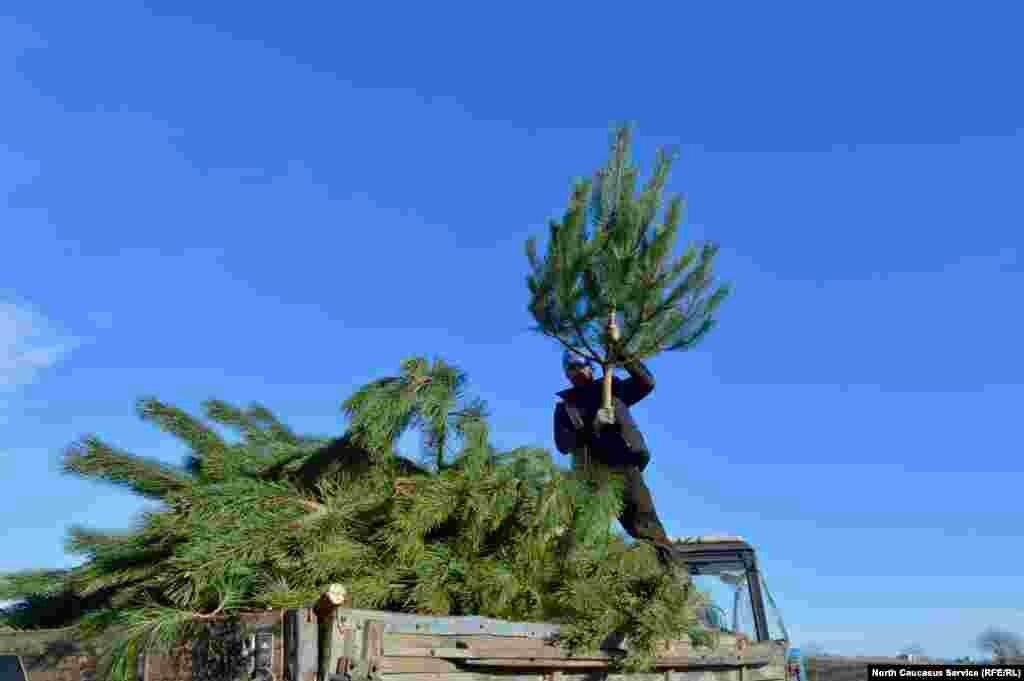 Чтобы проредить лес, обычно убирают слабые и некрасивые деревья