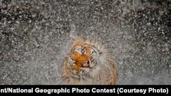2012 йилги 'National Geographic' фототанлови ғолиблари