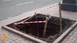 У Києві садять каштани