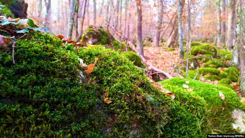 Валуни в лісі обросли мохом