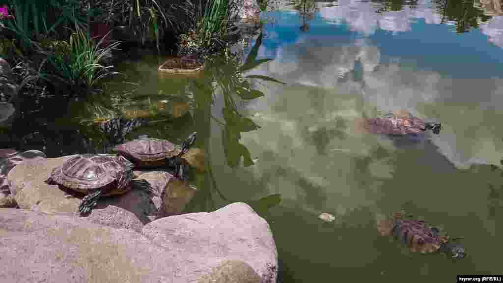 На території парку ростуть як типові кримські рослини, так і привезені з усього світу дерева. Для теплолюбних кактусів обладнана спеціальна оранжерея. А в місцевому ставку живуть черепахи.  Більше фото з парку «Монтедор» – у фотогалереї