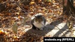 Прыкормлены Юрыем Іванавічам кот