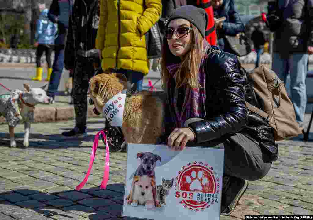 «Animal SOS Одесса» – одна из волонтерских групп помощи бездомным животным