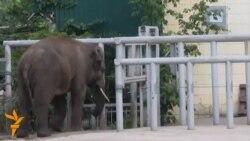 Київський слон Хорас хворий на самотність