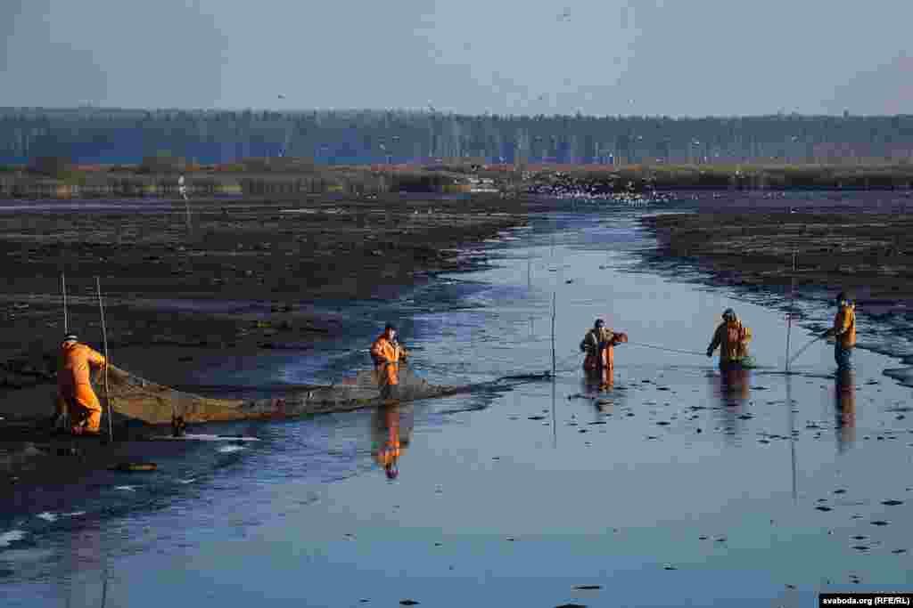 Прежде чем переправить рыбу на зимовку, осушают пруд, где карпы жили летом.