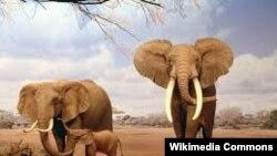 میزان انقراض نسل و نابودی گسترده جانوران در ادامه ششمین انقراض گسترده جانوری طی نیم میلیارد سال گذشته ارزیابی میشود