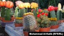 نباتات زينة مستوردة