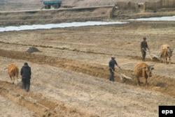 کشاورزان کره شمالی؛ آوریل ۲۰۰۵