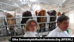 Сучасний доїльний зал підприємства «Агроцех № 10», Мангуш Донецької області