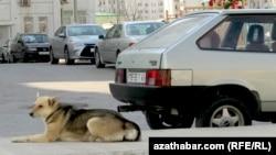 Собака, лежащая рядом с припаркованными автомобилями во дворе многоэтажного жилого дома в Ашгабате