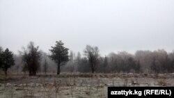 Ататүрк паркындагы кыйылган дарактар. 2011-жыл.