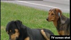 Bosnia and Herzegovina - Sarajevo, TV Liberty Show No.796 31Oct2011