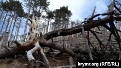 Последствия лесных пожаров в Ялтинском горно-лесном природном заповеднике