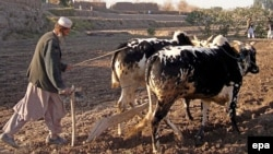 U.S. civilian advisers would help rebuild Afghanistan's agriculture sector, among other tasks.