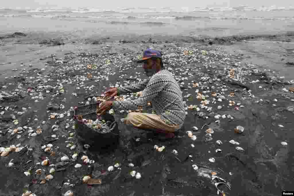 A member of Pakistan's Fishermen Awareness Forum collects live shell fish, after they have washed ashore, to put them back in the sea off Karachi's Clifton beach. (Reuters/Akhtar Soomro)