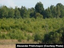 Заброшенные сельскохозяйственные земли, Рязанская область
