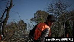 Дарахтлари кесиб ташланган хиëбон