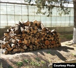 Срубленные на территории НИИ деревья.