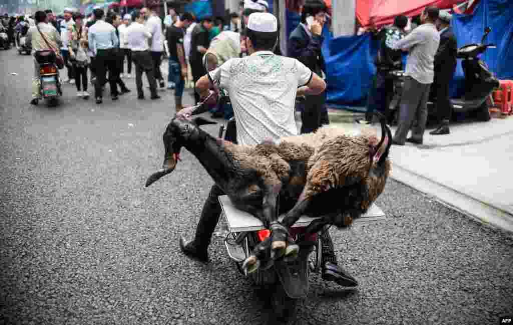 Этого барана во времяпразднования Курбан-Байрама(24 сентября) принесли в жертву в Мекке. В тот день в давке погибли 717 паломников