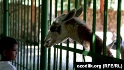 Uzbekistan - Tashkent zoo, 23Sep2012