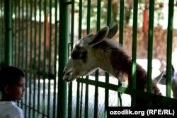 Тошкентликлар зоопаркда янги ҳайвонлар пайдо бўлмаётганидан ҳафа