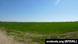 Засеянае поле ля вёскі Вохар