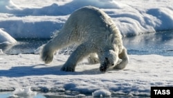 A polar bear on an ice floe in the Arctic Ocean (file photo)