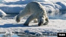 A polar bear lying on an ice floe in the Arctic Ocean