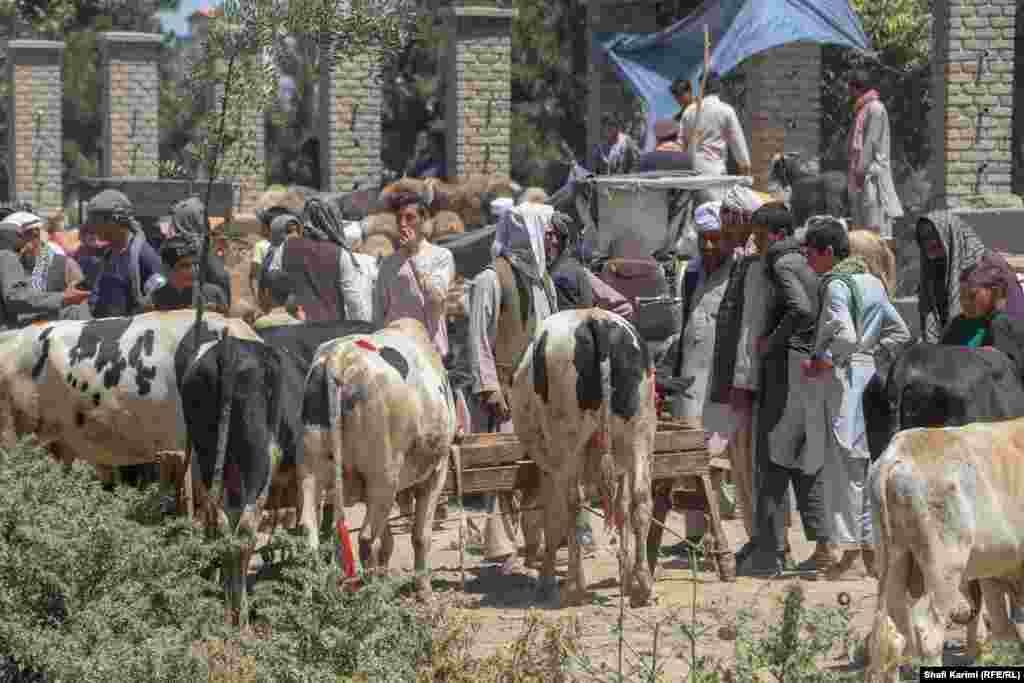 Shoppers and sellers bargain for animals on sale in Kabul's Chaman-e-Hozori -- traditionally a sports field and playground for children – that has turned into a livestock market before Eid.
