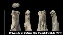 Homo sapiensə aid olduğu bildirilən sümüklər, arxiv fotosu
