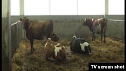 Bosnia and Herzegovina Liberty TV Show no. 956