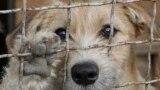 Собака в приюте под Киевом