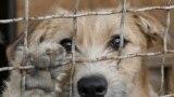Собака у притулку під Києвом