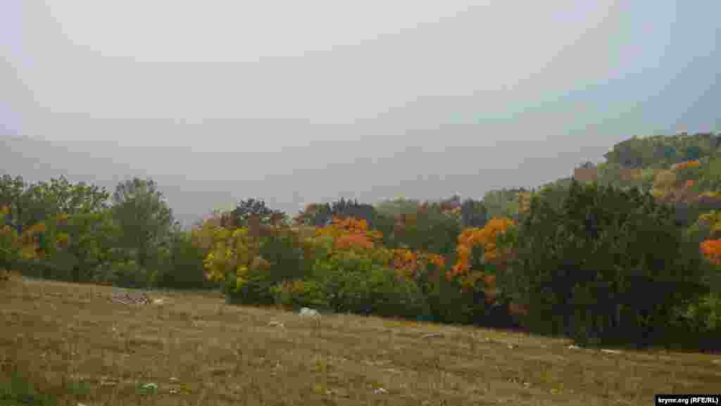 Краски крымского леса