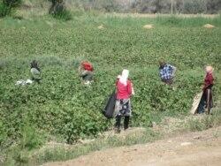 Türkmenabat: Býujet işgärleri pagta çekilip başlandy