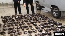 Chinese customs officials count the smuggled bear paws in Manzhouli, in the Inner Mongolia Autonomous Region, on June 15.