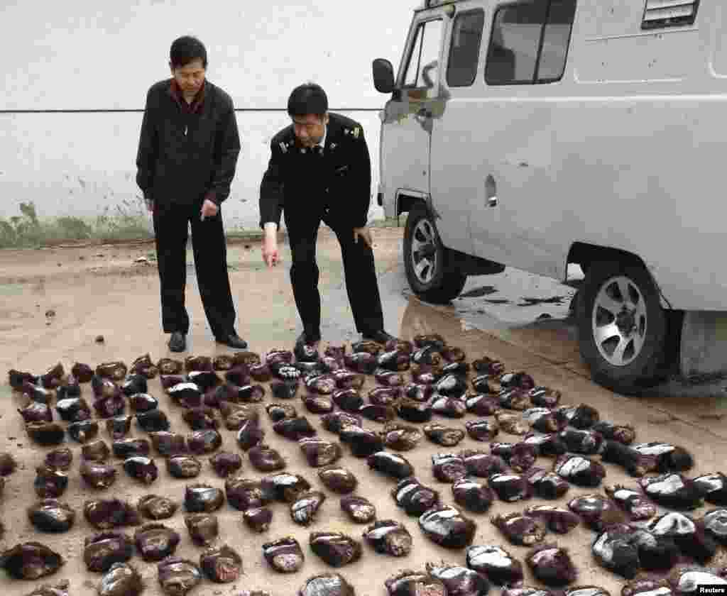 Customs officials count smuggled bear paws in Manzhouli in China's Inner Mongolia Autonomous Region. Two Russians were arrested for smuggling 213 bear paws into China. (Reuters)