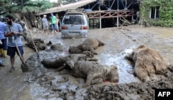A municipal worker stands near dead animals at the flooded zoo.