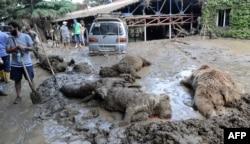 Трупы жывёлаў у тбіліскім заапарку