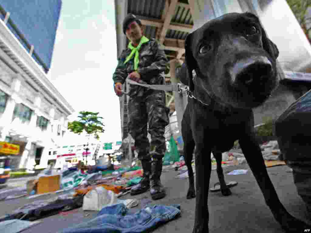 Тайлянд, Бангкок: паліцэйскі сабака для вынюхваньня выбухоўкі ў раёне масавых пратэстаў.