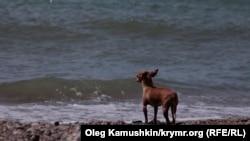 Крим (ілюстраційне фото)