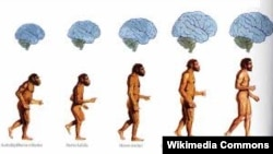 Homo sapiens же акыл-эстүү адамдын башатынын табышмагы дале толук жандырыла элек.