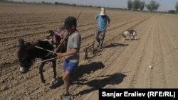 Быйыл фермерлерге насыя үчүн өкмөт 5 млрд сом бөлдү
