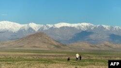 Авечкі на пашы на ўскраіне Кабулу