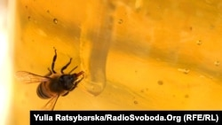 За даними Держспоживслужби, станом на 20 червня до відомства зі скаргою на масову загибель бджіл звернулося п'ятеро пасічників, два випадки вже досліджені