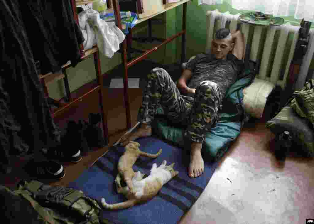 A member of the Donbass battalion, a volunteer militia group devoted to ensuring a united Ukraine, rests with some cats in a school converted into a base on August 18 in the city of Popasna, Luhansk Region. (AFP/Anatolii Stepanov)